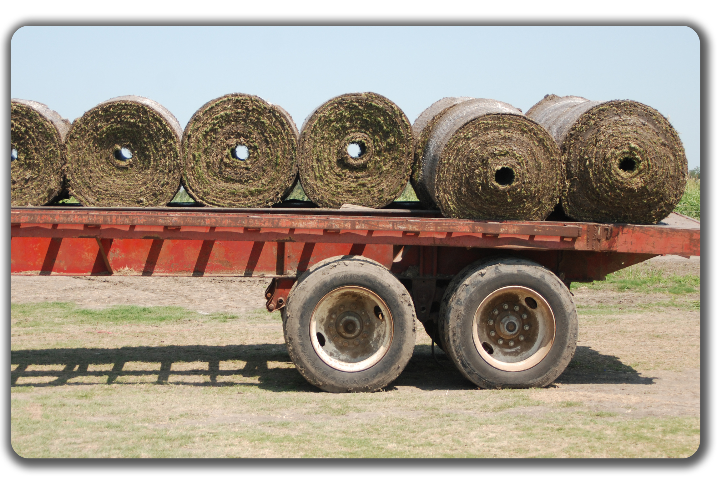 Blue Sod Sky sod delivery dallas fort worth ellis waco austin